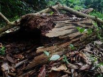 Een Vernietigde boom Royalty-vrije Stock Foto's