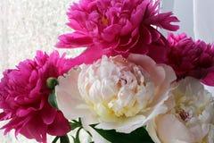 Een vers boeket van roze pioenen royalty-vrije stock foto