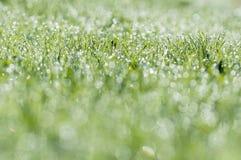 Een vers groen die gras in zonlicht met druppeltjes wordt behandeld Stock Afbeeldingen