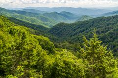 Een verscheidenheid van Bomen maken omhoog tot Forest Covering Blauw Ridge Mountains royalty-vrije stock foto