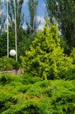 Een verscheidenheid van kleuren, bomen en vormen van stadsstraten Zonnige de zomerdag royalty-vrije stock afbeelding