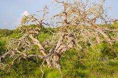 Een verscheidenheid van levend gebladerte die een dode boom omringen Royalty-vrije Stock Foto's