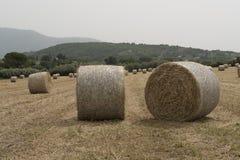 Een verscheurd veevoedergebied Wiel Stock Foto