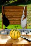 Een verse geplukte Franse zoete meloen Stock Afbeeldingen