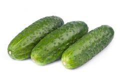 Een verse groene komkommer Stock Foto's