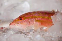 Een verse vis. royalty-vrije stock fotografie