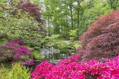Een vijver in de Japanse tuin in park Clingendael, Den Haag wordt omringd door azalea's en bomen en struiken in velen verschillen stock afbeeldingen