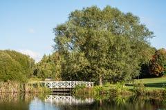 Een vijver in een park op een zonnige dag Stock Afbeeldingen