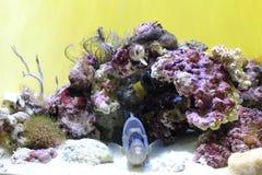 Een vis in de tank royalty-vrije stock foto