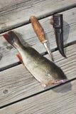Een vis op een dok royalty-vrije stock foto
