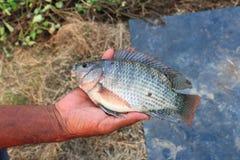 Een vis op een hand Stock Afbeeldingen