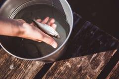 Een vis in een zilveren emmer ter beschikking royalty-vrije stock afbeelding