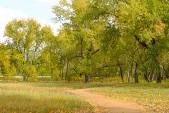 Een visie in heldere de herfstkleuren van aard Royalty-vrije Stock Afbeeldingen