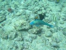 Een Vissenpak Royalty-vrije Stock Afbeeldingen