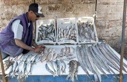 Een visser en zijn vangst voor verkoop bij de haven in Essaouira, Marokko Royalty-vrije Stock Foto