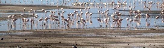 Een vlaag van flamingo's bij Meer Magadi, Rift Valley, Kenia royalty-vrije stock afbeeldingen