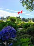 Een vlag die van Canada vallantly op de achtergrond met purpere hyd vliegen royalty-vrije stock fotografie