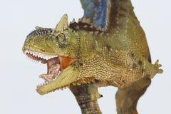 Een Vlees die Carnotaurus-Dinosaurus, Vlees eten die Stier eten Royalty-vrije Stock Afbeeldingen