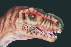 Een Vlees die Giganotosaurus-Dinosaurus eten tegen Zwarte royalty-vrije stock foto's