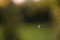 Een vlieg in een spinneweb wordt gevangen dat Royalty-vrije Stock Foto's