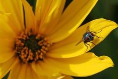 Een vlieg geniet van de warmte van de zon Stock Foto