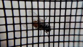 Een vlieg op het venster stock fotografie