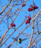 Een vliegende vogel tegen de hemel Royalty-vrije Stock Afbeeldingen