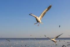 Een vliegende zeemeeuw in de blauwe hemel Stock Foto's
