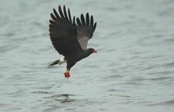 Een vlieger van de Slak Stock Foto's