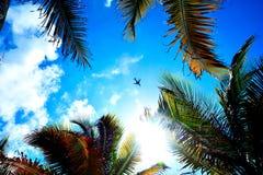 Een vliegtuig die boven de palm vliegen stock foto
