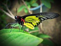 Een vlinder stock foto