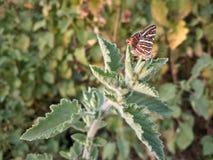 Een vlinder royalty-vrije stock afbeeldingen