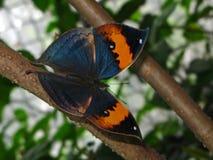Een vlinder Stock Afbeelding