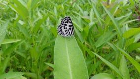 Een vlinder die alleen in de aard voelen Stock Foto