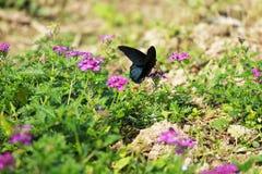 Een vlinder onder de bloemen wordt gefladderd die royalty-vrije stock fotografie
