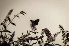 Een vlinder zit op een struik, gekleurde antiquiteit stock fotografie