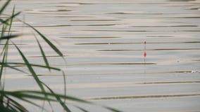 Een vlotter voor hengels in het water terwijl visserij Een vlotter in de watersignalen die de vis bijt Vlotter op stock video