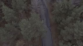 Een vlucht over een bospark, pijnboombomen, die over treetops en een weg met een maximum snelheidteken vliegen van 20 km/h, over stock footage