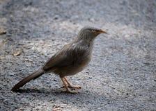 Een vogel; de bosvogel wil nooit een kooi stock foto