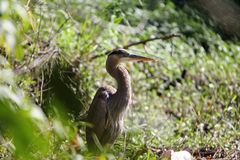 een vogel in de struik royalty-vrije stock foto's