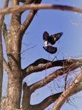 Een vogel in de takken Royalty-vrije Stock Afbeeldingen