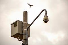 Een vogel dichtbij aan land op een post met een veiligheidscamera royalty-vrije stock foto's