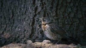 een vogel dichtbij boom Royalty-vrije Stock Foto