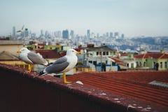 Een vogel dichtbij Hagia Sophia in Istanboel, Turkije Stock Foto