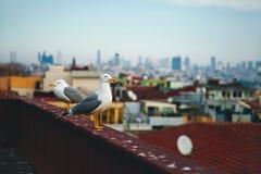 Een vogel dichtbij Hagia Sophia in Istanboel, Turkije Stock Fotografie