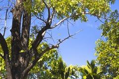 Een vogel die de vleugel op de grote boom schoonmaken Royalty-vrije Stock Foto