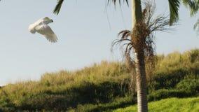 Een vogel die op bomen vliegen stock video