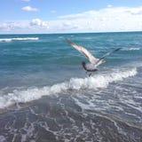 Een vogel die over het overzees vliegen Stock Foto's