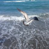 Een vogel die over het overzees vliegen Royalty-vrije Stock Fotografie