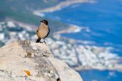 Een vogel die zich op de steen bevinden Stock Foto's